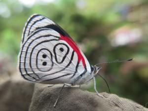 89 butterfly 1